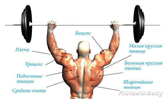 какие мышцы работают при жиме стоя