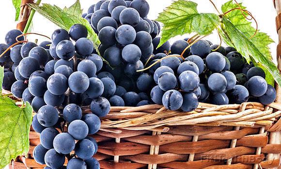 целебные свойства винограда